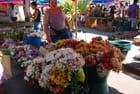 les fleurs du marché de Saint Paul