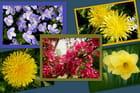 Les fleurs du printemps.