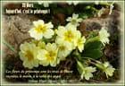 Les fleurs du printemps sont les rêves de l'hiver ....