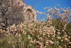 les fleurs sèches de septembre