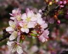 Les fleurs sous le soleil du 14-04-2013