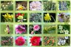 Les floraisons de début mars