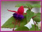 Les jolis froufrous d'une fleur