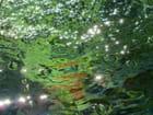 Les lucioles d'eau