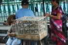 les oiseaux d'Ho Chi Minh ville