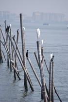 les oiseaux des blackwaters de Cochin
