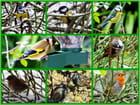 Les oiseaux du ciel dans mon jardin