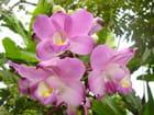 Les Orchidées de Mr FRANCK Rabarijaona