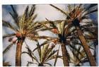 Les palmiers
