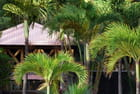 les palmiers de Grand Anse