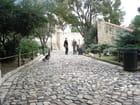Les paons du château de São Jorge