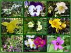 Les petites fleurs de février dans le jardin