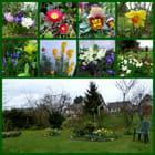 Les petites fleurs du printemps dans le jardin