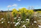 Les petites fleurs sauvages du chemin de terre