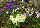 Les petits fleurs sauvages du jardin