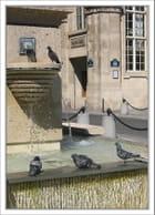 Les pigeons à la fontaine