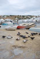 les pigeons de Mykonos