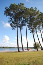 les pins au bord du lac