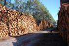 Les pins coupés