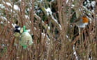 les pioupious en hiver