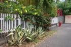 les plantes de trottoirs