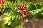 les plantes du sud
