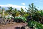 les plantes grasses du Conservatoire Botanique de Saint Leu
