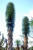 les plantes grasses du Conservatoire National Botanique de Mascarin