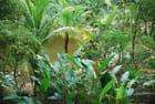 les plantes tropicales