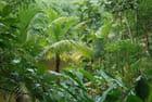 les plantes tropicales du Gumbalimbapark