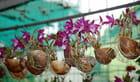 les pousses d'orchidées