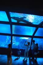 les requins de l'aquarium de Saint Gilles Les Bains