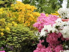 Les rhododendrons 2
