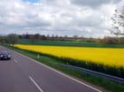 les routes Danoises au mois de mai