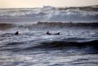 les surfeurs de décembre