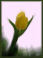 Les tulipes du dimanche