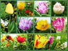 Les tulipes sont les reines des jolis printemps