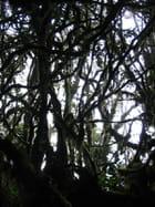 Lianes de la Mossy Forrest
