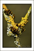 Lichen Collection (20120318-112)
