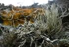 Lichens maritimes
