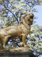 Lion Voiron avril2009