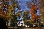 Loury en automne