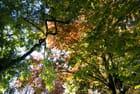 Lumière d'automne