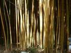lumière dans les bambous