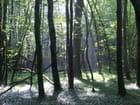 Lumière de la forêt