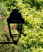 Lumière fleurie