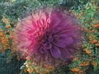 ma passion des fleurs
