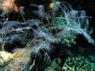 Macro plante aquatique
