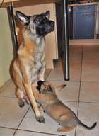 Maman et son chiot
