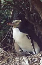 Maman pingouin et bébé